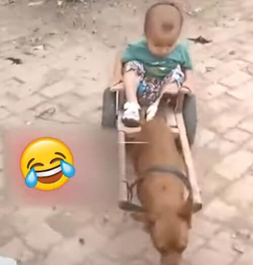 мальчики катаются на собаке