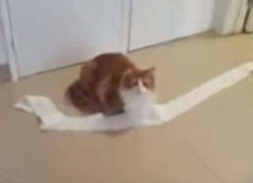 кошка не совсем лишена совести