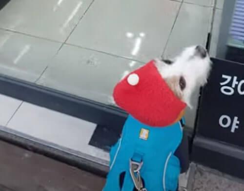 пёс возле зоомагазина