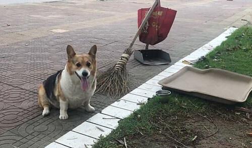 собака работает с хозяйкой