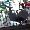 женщина лезет через ограду