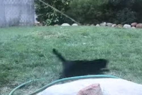 кошка играет со шлангом