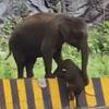 мама-слониха помогла слонёнку