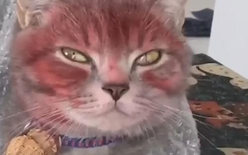 кота измазали в губной помаде