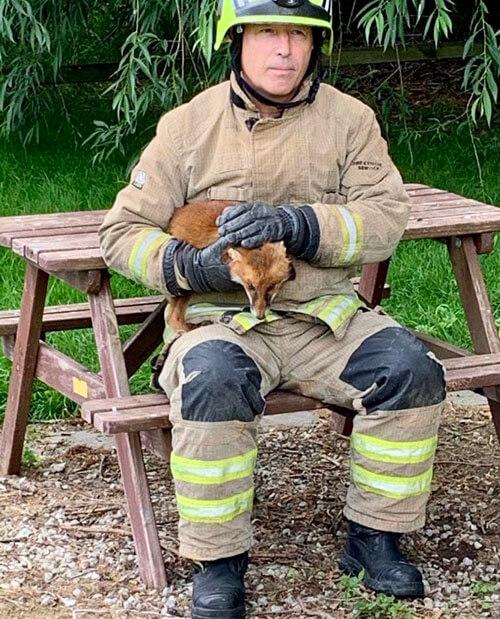 лиса застряла в столе для пикника