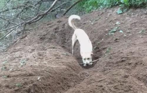 собаке не нужна компания