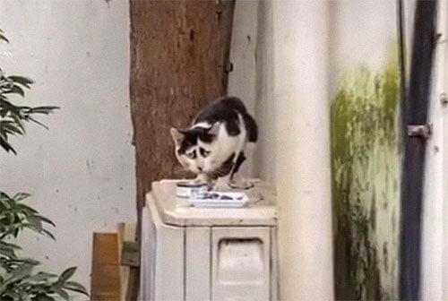 грустный окрас кошки