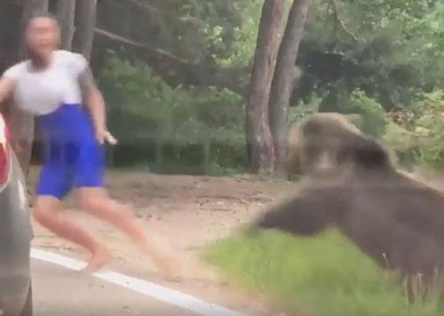 общение с диким медведем