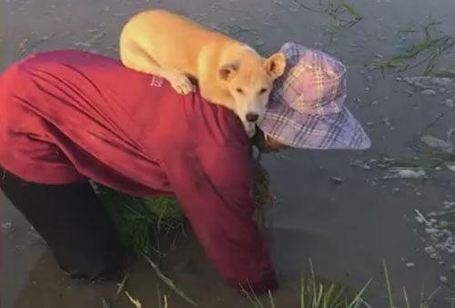 щенок на спине у хозяйки