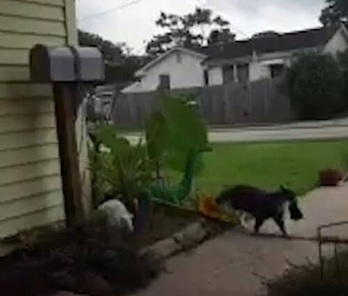 кот крадёт соседскую одежду