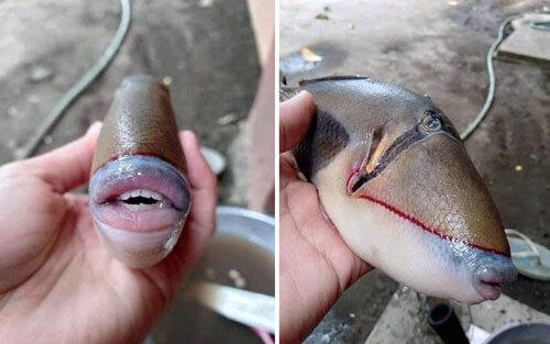 рыба с человеческими губами