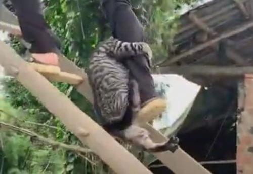 кошка вцепилась в ногу спасителя