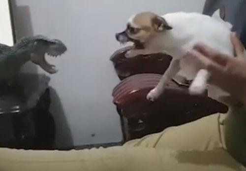 собаки и игрушечный динозавр