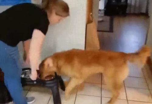 собака сходит с ума в ожидании еды