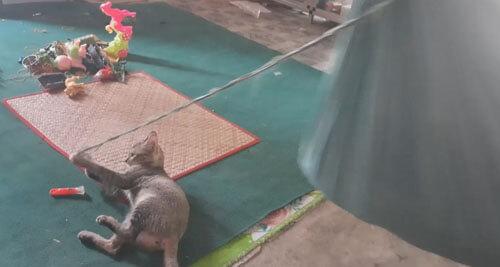кошка раскачивает гамак