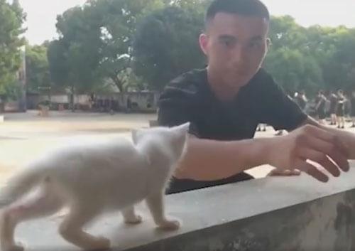 котёнок пострадал от наводнения