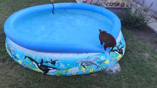 нерешительный пёс у бассейна