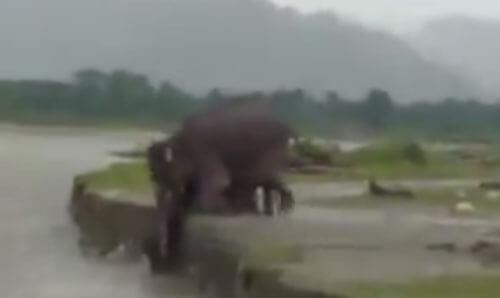 слонёнок влез на берег реки