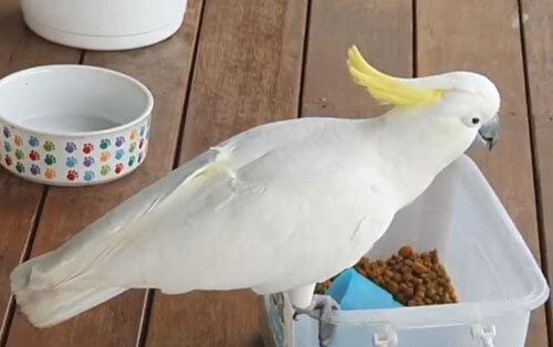 попугай ворует собачий корм