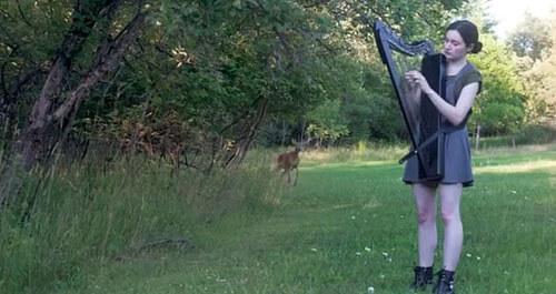 дикий олень слушает арфу