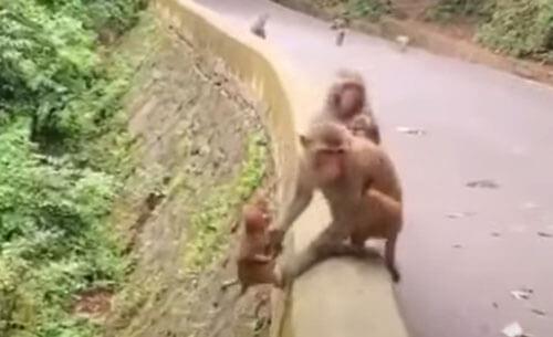 обезьяна помогла своему детёнышу