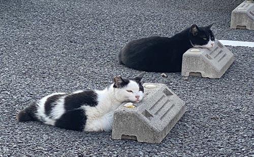 кошки на парковочных барьерах