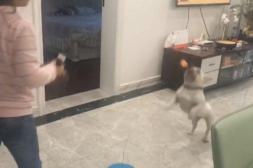 необычный пинг-понг с собакой