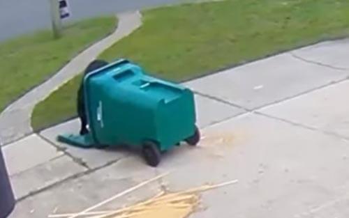 медведь опрокинул мусорный бак