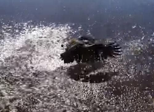 несчастливая рыба была съедена