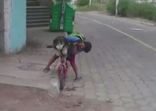 мальчик надел на собаку маску