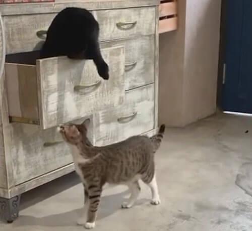 кот поймал сестру в ловушку