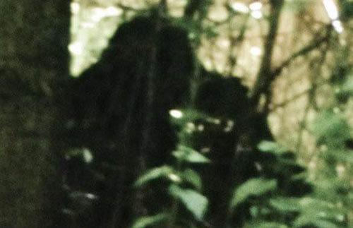бигфут прыгал по деревьям
