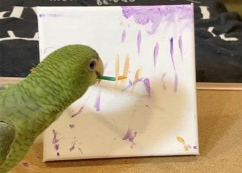 трюки талантливого попугая