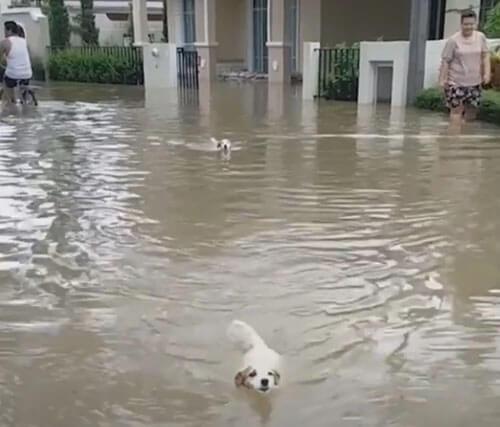 радость после сильных дождей