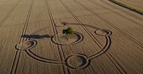 рисунок в поле вокруг дерева