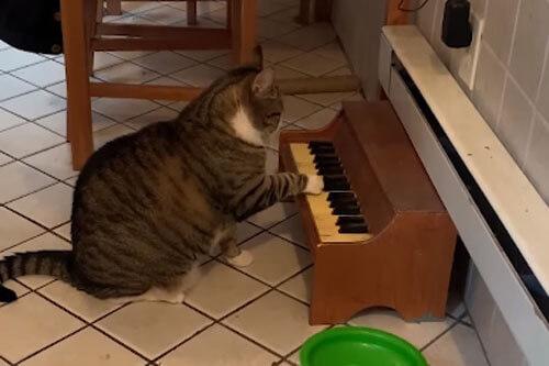 кот играет на пианино