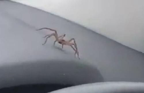 страшный паук в машине