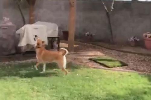 пёс впервые в жизни увидел дождь