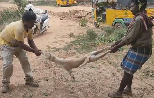 грубый способ помочь собаке
