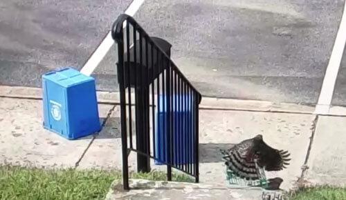 пластиковая корзинка для зайца