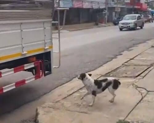 собака в школьном автобусе