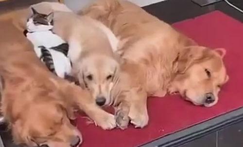 собаки уходят с крыльца магазина