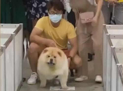 собака ест во время соревнования