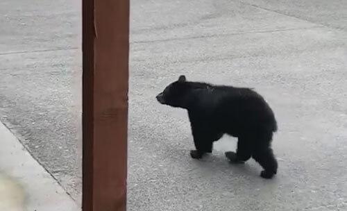 медведь влез в мусорный бак