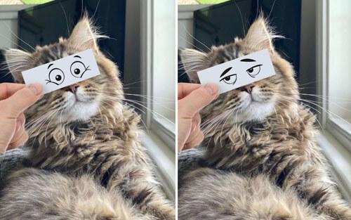 кошки с уморительными лицами