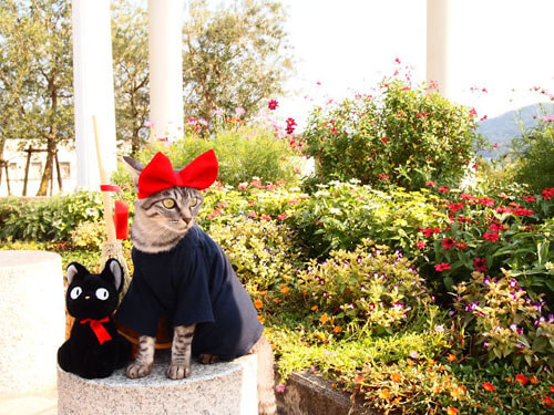 аниме-костюмы для кошек