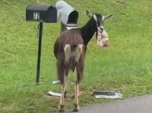 кража почты из ящика