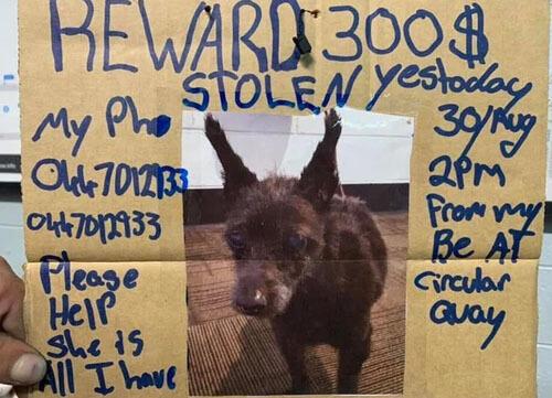 у бездомного украли собаку