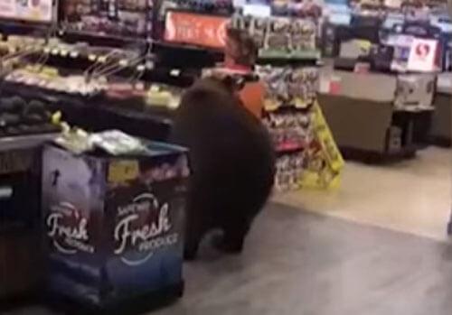 наглый медведь в магазине