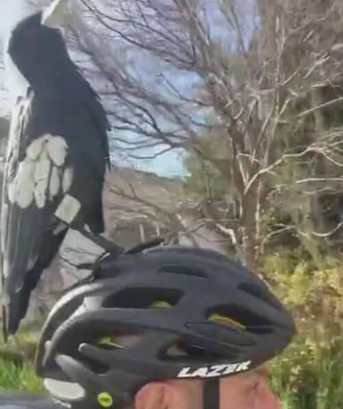 фальшивая сорока на шлеме